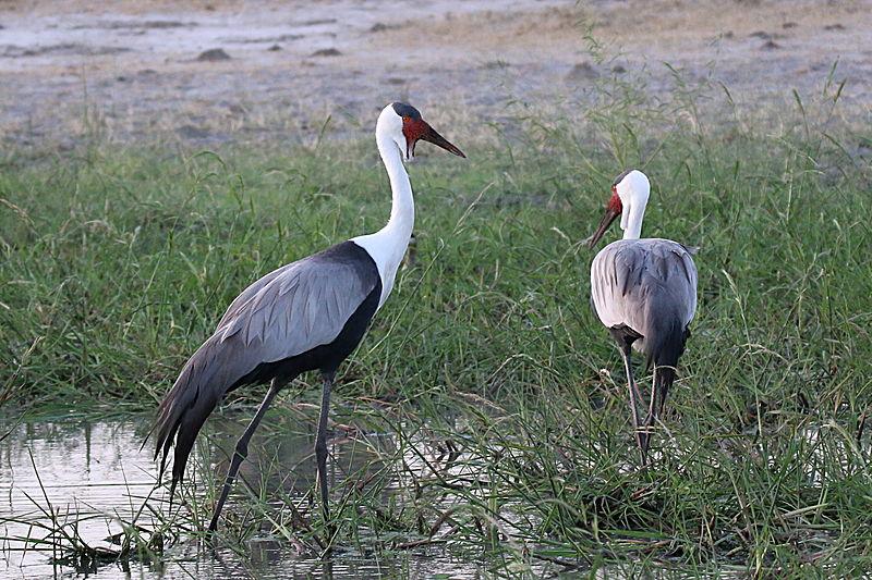 Découvrir une riche faune lors d'un prestige voyage en Namibie